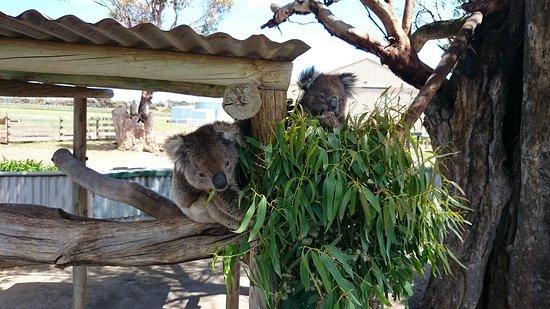 Port Lincoln, Australia: DSC_1098_large.jpg