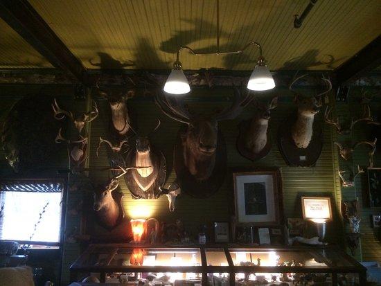 Main Street Museum: Animal heads.