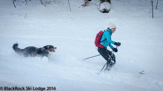 Les Houches, Fransa: Koda, our #SkiHound and Lizzy heading home to BlackRock Ski Lodge