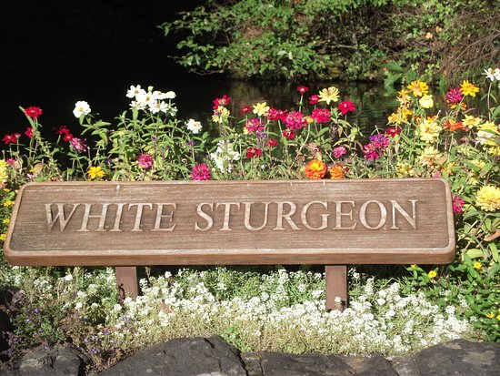 Cascade Locks, OR: The sign in front of the Sturgeon Pond