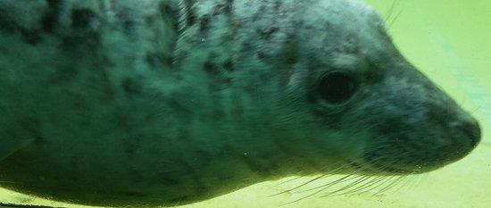 Gweek, UK: Seal