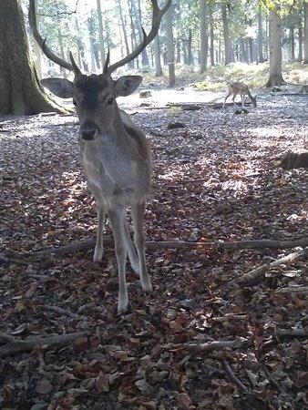 Hanau, Alemania: Pretty deer