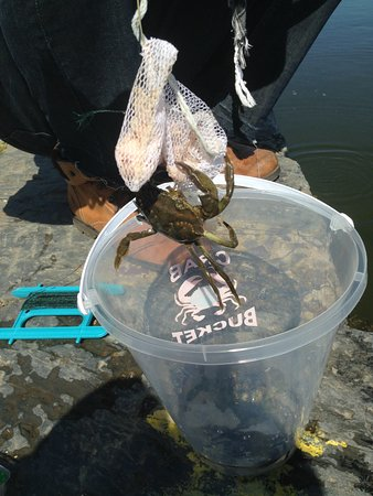 Porthmadog, UK: Check out the crabs