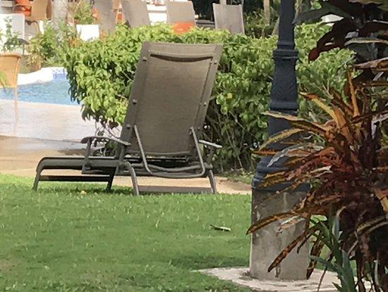 Sugar Cane Club Hotel & Spa: Pool bar