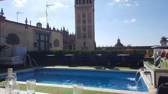 Zwembad Op Dakterras : Het dakterras met zwembad foto van hotel dona maria sevilla