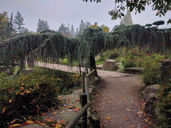 Jardin japonais picture of jardin japonais nantes tripadvisor for Jardin japonais nantes