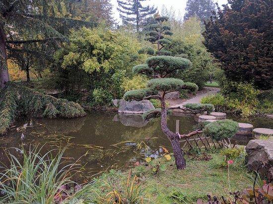 Dalles rondes sur l 39 eau picture of jardin japonais nantes tripadvisor for Jardin japonais nantes