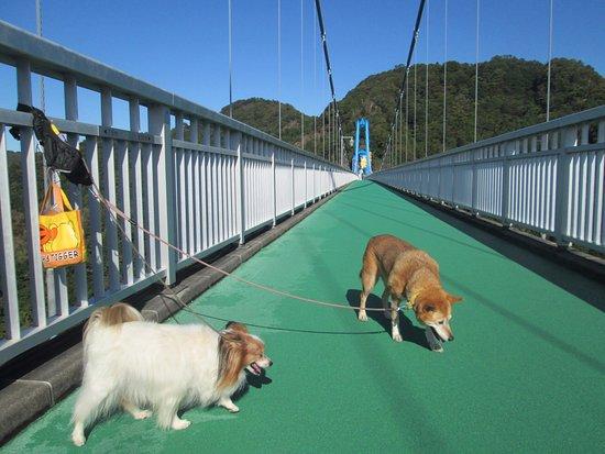 竜神大吊橋, 犬と吊り橋