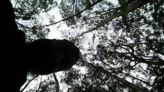 Great Otway National Park, Australia: 20161026_092711_large.jpg