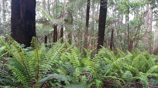 Great Otway National Park, Australia: 20161026_092824_large.jpg