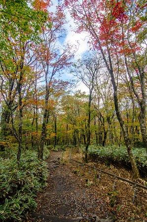 Hallasan National Park: 御里牧路線,攝於十月底  Eorimok trail, late-Oct