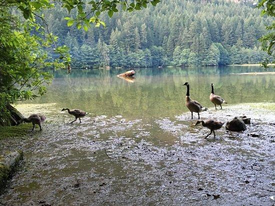 Colonial Creek Campground - Stehekin Valley Trail Bild