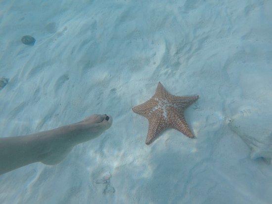 Posada Mediterraneo : Parte del recorrido puede incluir Rabusqui donde abundan las estrellas de mar