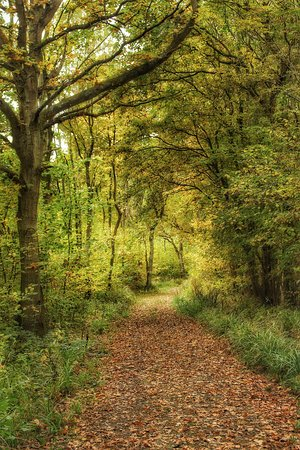 Pershore, UK: Tiddesley Wood Nature Reserve