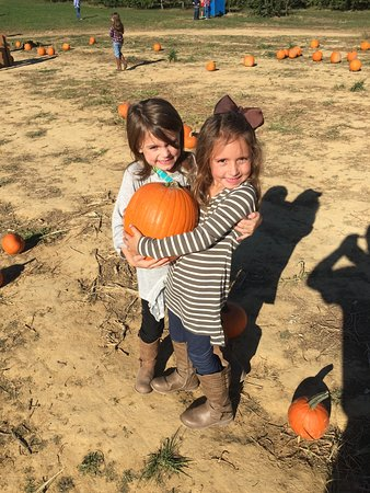Jackson's Orchard: Pumpkins picking Pumpkins