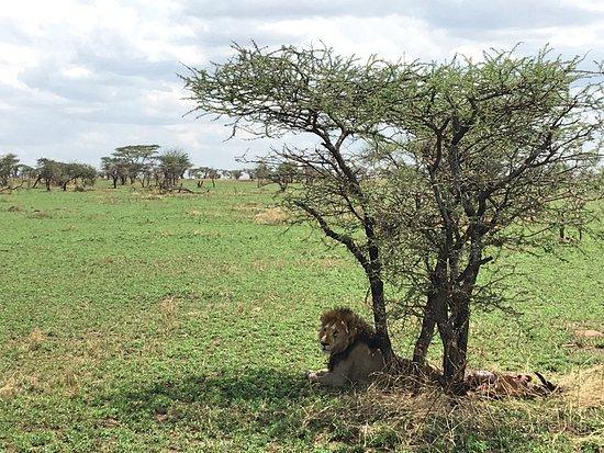 Область Аруша, Танзания: Greg Adventures