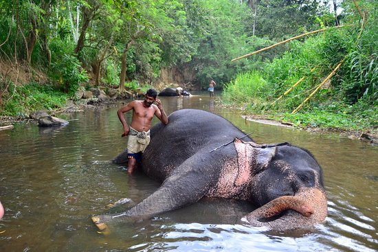 Kegalle, Sri Lanka: Seetha and her mahout, with Mannika in the distance