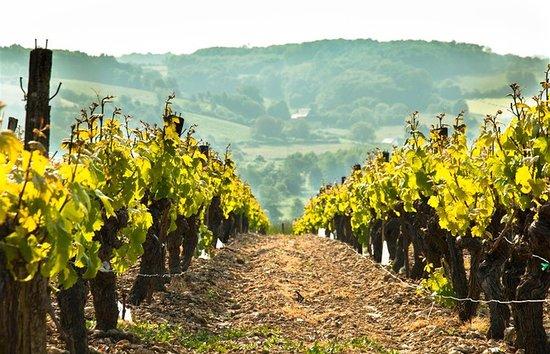 Lunay, France : région viticole : AOC Côteau du Vendômois
