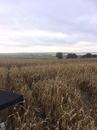 Southwold Maize Maze: photo0.jpg