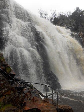 แฮมิลตัน, ออสเตรเลีย: McKenzies Falls