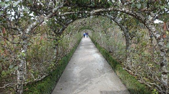 Сент-Остелл, UK: Lovely geraniums and the Italian gardens
