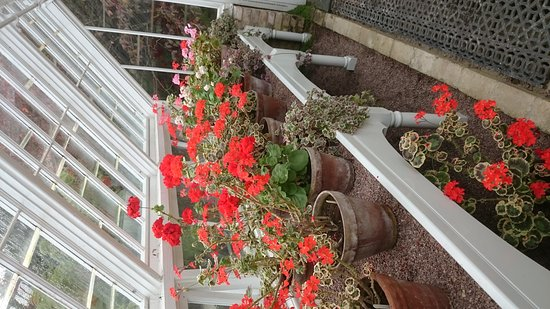 St Austell, UK: Lovely geraniums and the Italian gardens