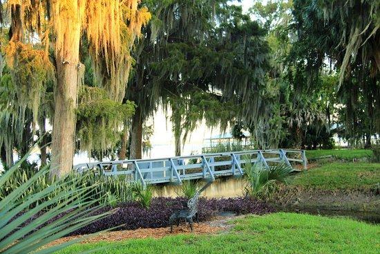Lake Panasoffkee, FL: Window View