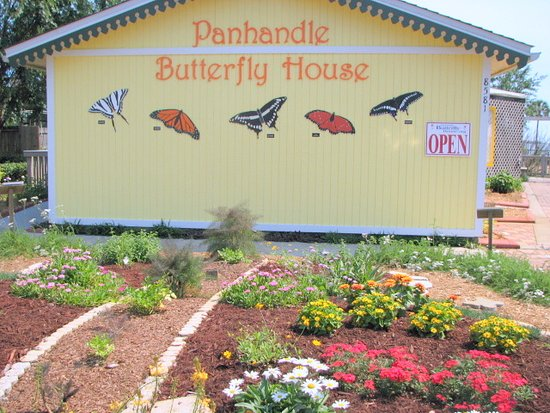 ‪Panhandle Butterfly House‬