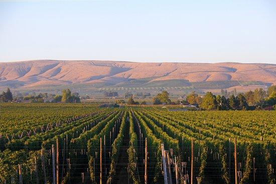 Yakima grows 75% of America's hops