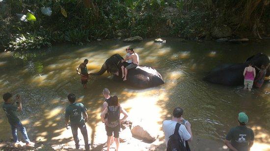 Kegalle, Sri Lanka: Milenium elephant foundation