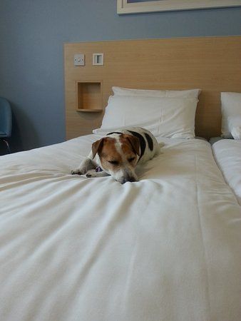 Hellingly, UK: Comfy bed for Doggie Dreams