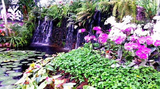 Jojutla, المكسيك: Orquideario del jardin tropical