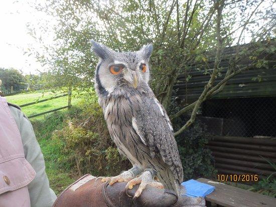Machynlleth, UK: Very cute owl