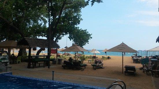 Tartaruga Hotel & Beach Restaurant: Zona de hamacas justo encima de la playa; la primera fila no se podia usar por las hormigas