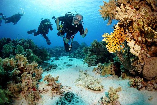 Camel Dive Club