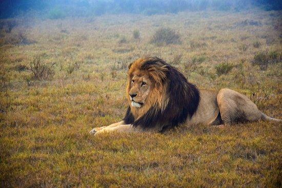 Schotia Safaris Private Game Reserve: Amazing safari!