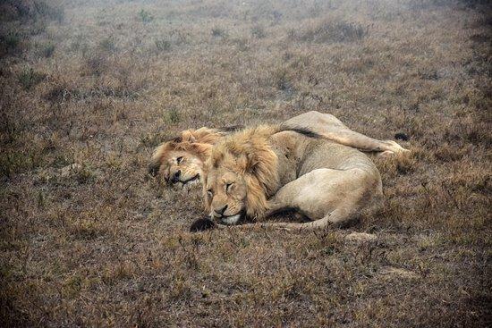 Schotia Safaris Private Game Reserve: photo0.jpg