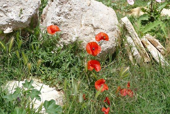 Клис, Хорватия: Крепостные цветы