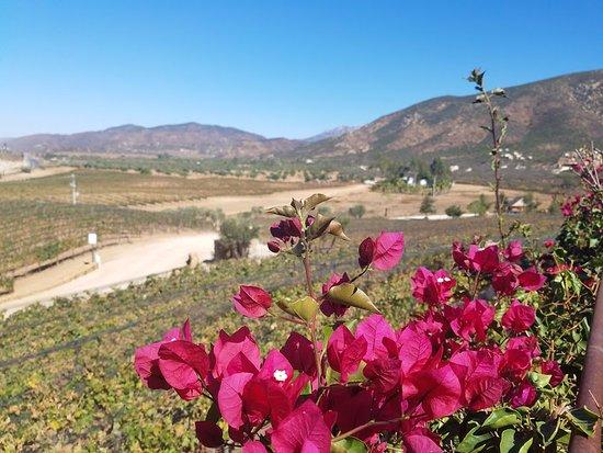 Baja Rancho La Bellota: View of the beautiful vineyards among the best wineries in Ensenada