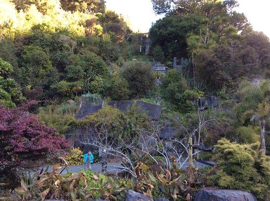 Whangarei Quarry Gardens August 2016