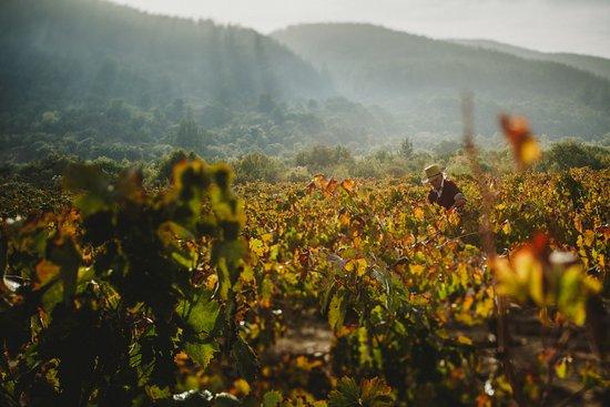 Maule Region, ชิลี: Viña Bouchon