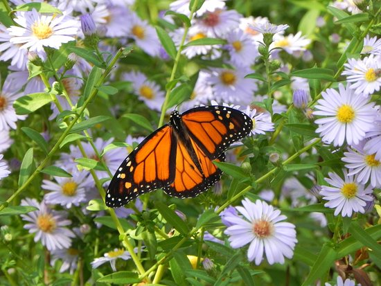 Fairfield Bay, AR: Ed Leaman Botanical garden photo