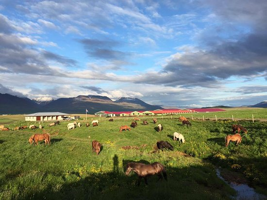 Varmahlid, Iceland: Welcome to Syðra-Skörðugil