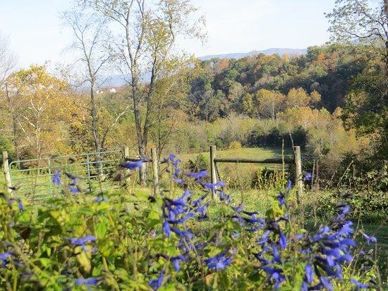 "Abingdon, فيرجينيا: Fall season in the ""back forty""!"