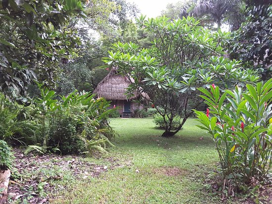 Punta Gorda, Belize: Garden with casita in background, ginger and frangipani in foreground