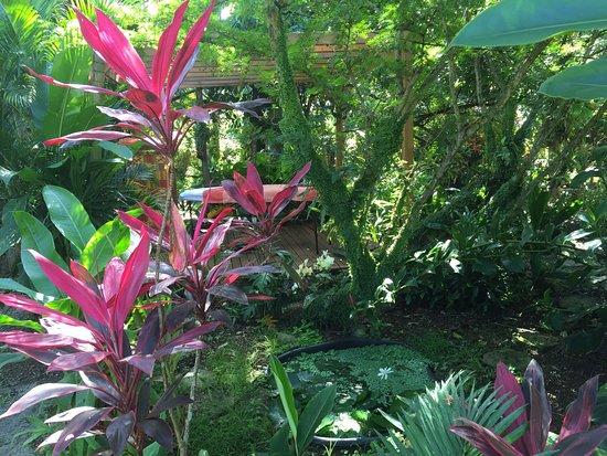 Pointe-Noire, Guadeloupe: photo0.jpg