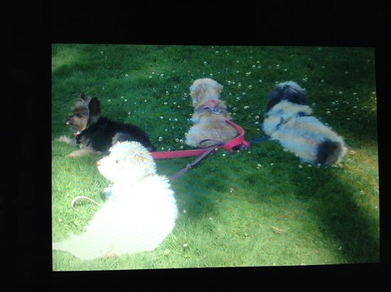 Los Gatos, CA: My 2 dogs made friends ! This photo is outside my patio and near pool area