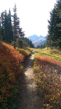 Mount Rainier: IMAG8101_large.jpg