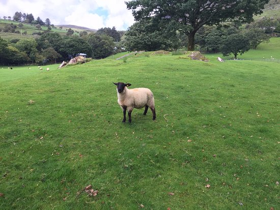 Kenmare, Irland: Welcoming committee!