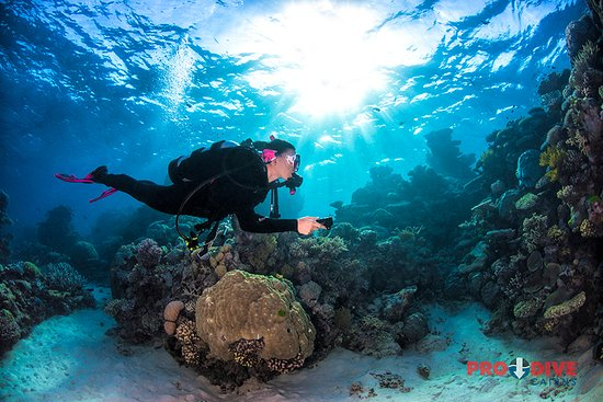 Pro dive cairns picture of pro dive cairns day trips cairns tripadvisor - Pro dive cairns ...